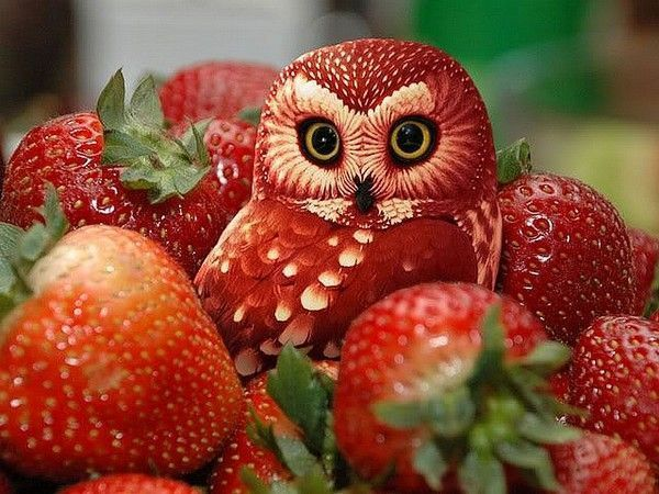 Chouette!  Des fraises!°°°°°° dans POUR SOURIRE 5dcc5243