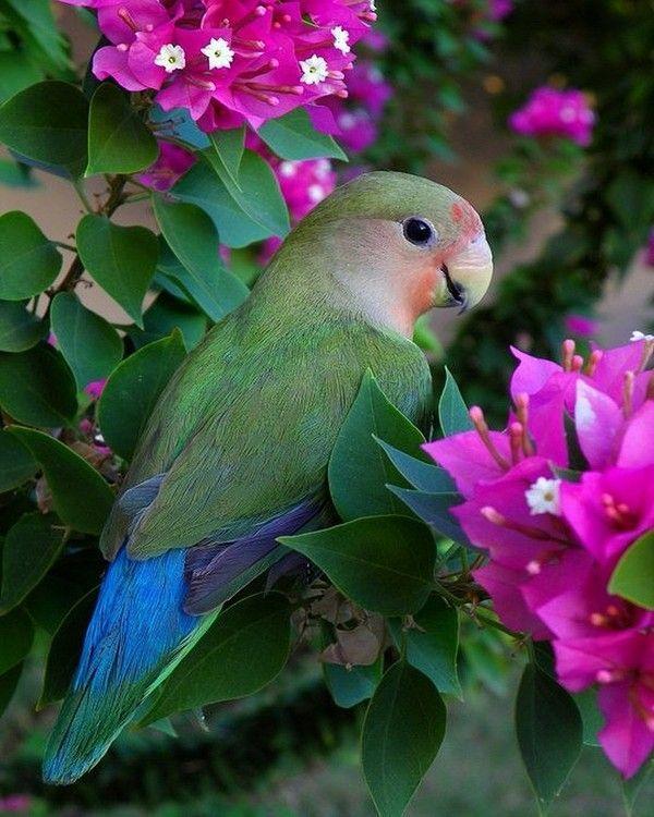 Animaux, nature et fantaisie